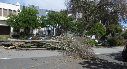 Tree_Monterey_2_2018_03_22